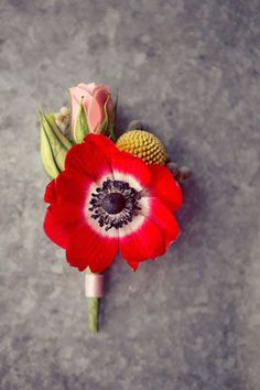 red anemone boutonniere with billy ball and pink rosebud Boutonnieres, Anemone Bouquet, Groomsmen Boutonniere, Ranunculus, Poppy Bouquet, Poppy Red Wedding, Floral Wedding, Wedding Bouquets, Ideas