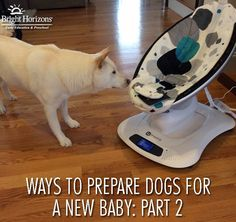 Ways to Prepare Dogs for a New Baby: Part 2