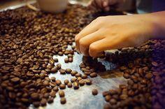 Cà phê và cuộc sống. cà phê Hải Phòng. Tam Ca Coffee. coffee bean. vietnamese. hai phong