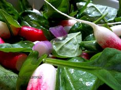 Kakukkfű: Bébispenót saláta