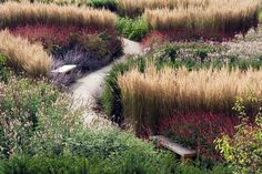 tall wheat grass along a property border with purple in front… Dan Pearson – B… tall wheat grass along a property border with purple in front… Dan Pearson – Broughton Hall