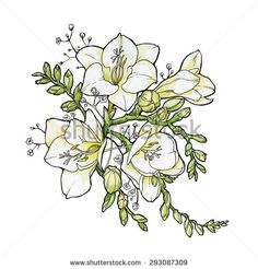 Image result for freesia flowers Freesia Flowers, Watercolor Illustration, Tatoos, Diagram, Stock Photos, Drawings, Image, Art, Art Background