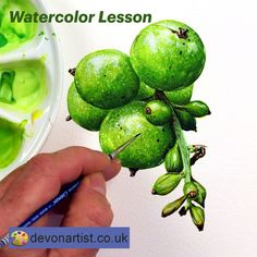 Learn to paint these berries in watercolor with a video tutorial.  Realistic botanical illustration painting which will develop your skills of painting round, 3D objects.  I take you step by step through the process of painting one berry and you then use your skills to paint the others. #PaulHopkinson #TheDevonArtist #berrypainting #botanicalpainting #watercolourpainting #watercolorpainting #botancialwatercolor #botanicalwatercolour #learnwatercolor #learnwatercolour
