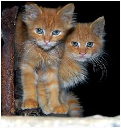 interesting - not sure what kind of cats these are