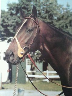 Seattle Slew