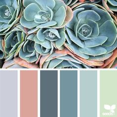 "1,379 Likes, 13 Comments - Jessica Colaluca, Design Seeds (@designseeds) on Instagram: ""today's inspiration image for { succulent hues } is by @lax_akl ... thank you, Erin, for another…"""