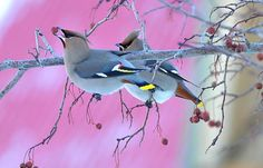 birds in winter Photo by Vassily Adamson -- National Geographic Your Shot