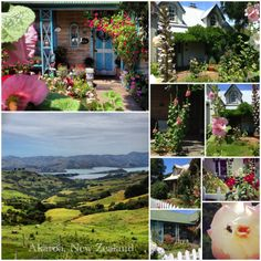 Travels through Akaroa, New Zealand Collage of Life by Jeanne Henriques Walkabout, Backpacking, New Zealand, Places Ive Been, Remote, Destinations, Romantic, World, Creative