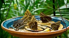 How to Attract Butterflies with a Homemade Butterfly Feeder - Simply Happy Healthy