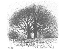 Winter trees in Greyfriars, Winchelsea