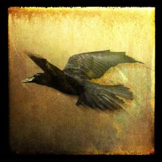 Raven Flight Photographic Print by Barbara Carter