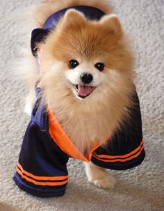 Illini Teddy Mush needs an outfit like this
