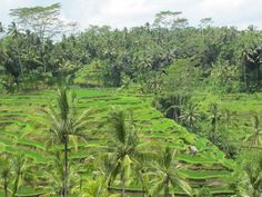Blog: Ten things to do and see in Bali