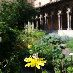 Papillon au cœur des Augustins :-) musée des augustins #toulouse #art Toulouse, Dandelion, Instagram, Flowers, Plants, Art, Butterflies, Art Background, Dandelions