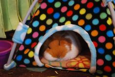 Piggy tent tutorial link - glad to see I am not alone in my plan to modify the original tutorial for my pigs!
