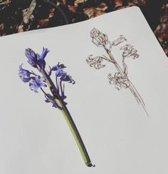 Did some plein air sketching and painting with @audraauclair today.  Thanks for the invite it was a lot of fun!  #pleinair #sketchbook #walnutink #drawing #botanical #illustration #floral #spring #flowers #art #drawing #artwithfriends #stilllife #sketching #outdoors #westcoast #yyjarts #sunshine #easterweekend by saracwilsonart