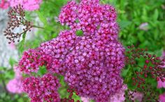 Fill bare spots in the garden with these fast-growing shrubs for privacy and instant impact. The best evergreen and flowering quick-growing shrubs Garden Shrubs, Flowering Shrubs, Trees And Shrubs, Shaded Garden, Evergreen Shrubs, Garden Beds, Small Flowers, Red Flowers, Small Trees