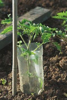 Trendy tohto týždňa v kategórii záhradkárčenie - sbel Q Garden, Potager Garden, Bottle Garden, Tomato Garden, Fruit Garden, Garden Paths, Vegetable Garden, Garden Tools, Easy Garden