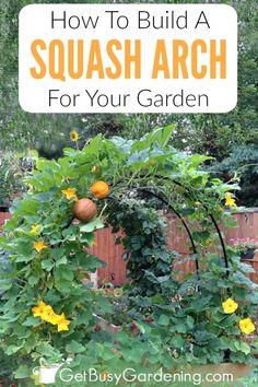 Build this gorgeous squash arch to add beauty and height to your vegetable garden. My unique DIY squash arch design is an inexpensive project that doesn't take much time to make. Download the full step-by-step squash arch instructions now.