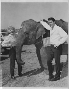Elvis Presley and Barbara Stanwyck with an elephant   University of wyoming american heritage center  - Barbara Stanwyck Papers Accession Number-3787-Box-15-roustabout-script1.jpg (551×710)