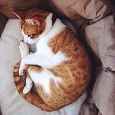 red cat having nap time @marina_giller Instagram