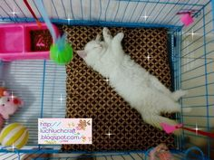 ~ ❤ ~ ✄ Luch Luch Craft: How to make easy bed for cat
