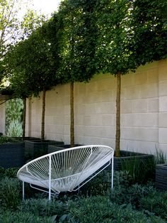 Show Garden by Patricia Fox of Aralia Garden Design. Great idea for increasing the height of a wall/fence.