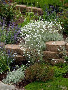 Landscape Arquitecture, Rock Garden Plants, Rock Wall Gardens, Garden Shrubs, Rockery Garden, Snow In Summer, Spring Summer, Sloped Garden, Xeriscaping