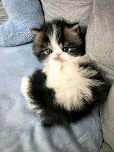 Look at this sweet kitten! :-)