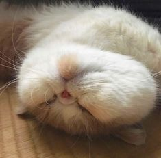 Ahhh, so cute, I want to pinch its face. #cats #cat #catlovers #catlover #catlife #cutecat #ilovecat Cute Cats And Kittens, Baby Cats, Cool Cats, Kittens Cutest, Cute Baby Animals, Animals And Pets, Funny Animals, Cute Cat Memes, Cat Aesthetic