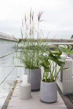 Lekre, lette frostsikre potter med betonglook. Er det ikke kult med grønne planter og strå?
