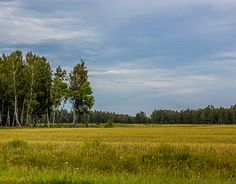 """Check out new work on my @Behance portfolio: """"Summer. Scenery."""" http://on.be.net/1gF1oVM"""