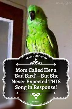 Another smarty-pants parrot. How are these birds getting so smart? Animals And Pets, Funny Animals, Pet Bird Cage, Bird Gif, Never Expect, Funny Pets, Smarty Pants, Stop Talking, Songs To Sing