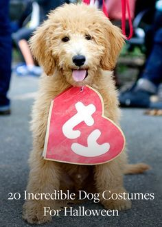 20 Ways to Dress Up Your Dog This Halloween. Halloween costume ideas for your favorite pet.