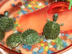 Turtles For Sale In The Sunday Pet Market Sevilla Turtles For Sale Pet Market Pets