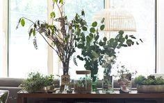 3 dicas para decorar com plantas