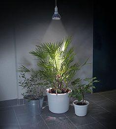 Växtbelysning till vanliga lampor