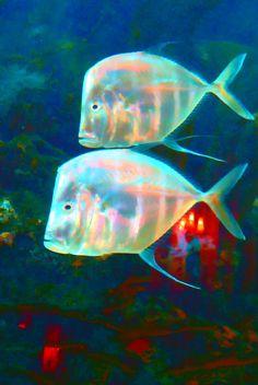 hit the lights, meistro....Fish by Carol Nichols on 500px