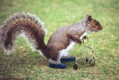 Image from http://funnystack.com/wp-content/uploads/2014/04/Funny-Squirrel-24.jpg.