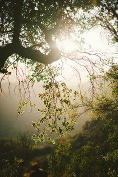 Druids Trees:  #Woods.