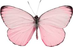 Butterfly Images, Pink Butterfly, Butterflies, Mariposa Butterfly, Vintage Butterfly, Alluka Zoldyck, Princess And The Pauper, Pink Images, Beautiful Bugs