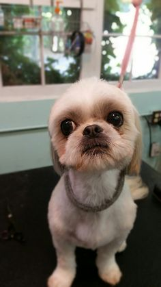 cute dog eyes photo