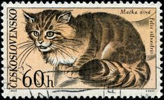 Wild cat (Felis sylvestris), designed by Czech artist Jozef Baláž (1923-2006), combined engraved by Bedřich Housa and photogravure, and issued by Czechoslovakia on September 25, 1967 as one of a set of six stamps depicting animals from Tatra National Park, Scott No. 1498. nethryk's image