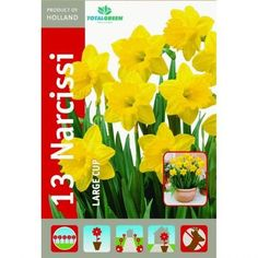13 Pack Yellow Daffodils TotalGreen http://www.amazon.com/dp/B00EUDYOBE/ref=cm_sw_r_pi_dp_1Wbpvb0X0H3FT