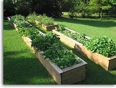 How to Start a Medicinal Herb Garden | Your Garden and Lawn - Owners Manual