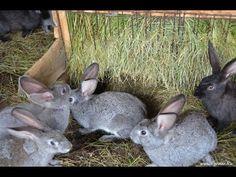 Содержание кроликов. Фермерское хозяйство Виктора Катанаева - YouTube