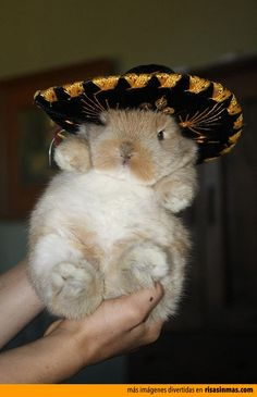 Conejo mexicano