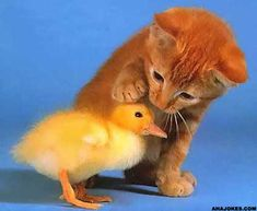 Don't worry, ducky. You're safe with me.
