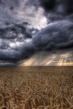 Looks like a Kansas wheat field and our storms!