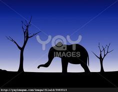 Elephant against a wild landscape.